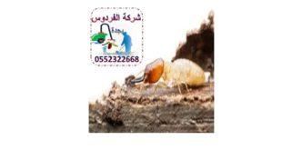 شركة ابادة النمل في جدة