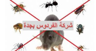 شركة مكافحة الحشرات