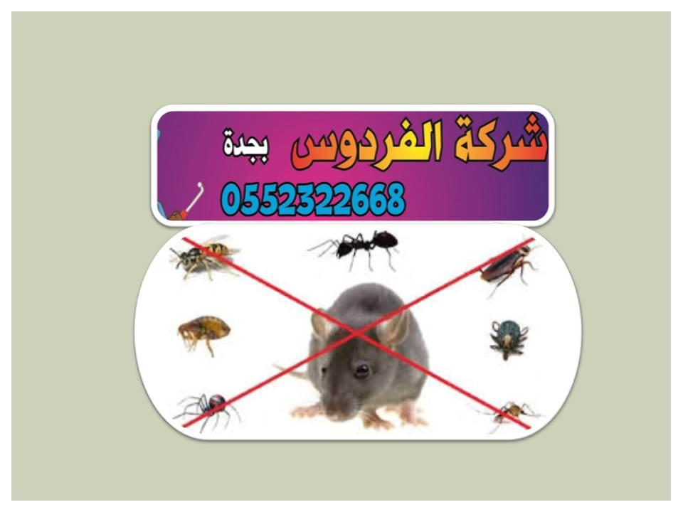 شركة ابادة الحشرات بجدة
