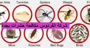شركة الفردوس مكافحة الحشرات بجدة